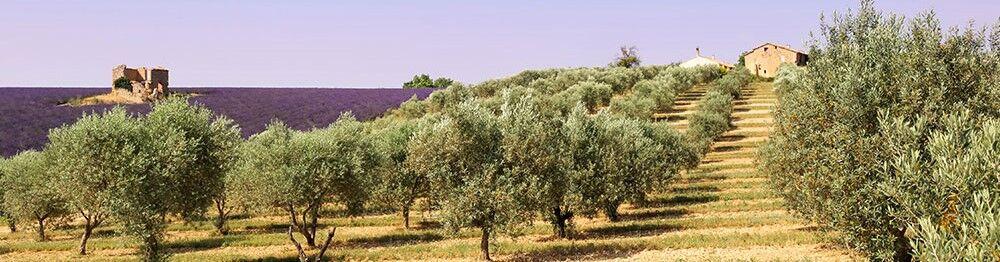 location vacances La Roque sur Pernes, découvrez la Provence avec Odalys