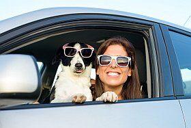 Conseil pour un trajet en voiture avec son chien