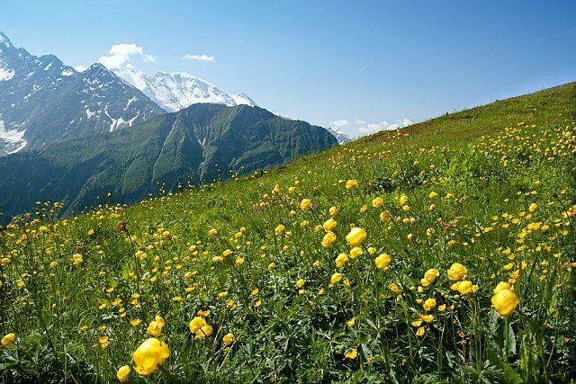 les Alpes du sud en plein été