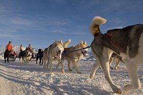 Balade en chiens de traineaux à l'Alpe d'Huez