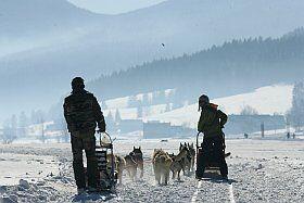 activité chien de traineaux dans le Vercors