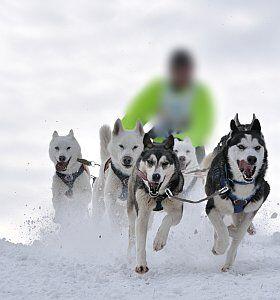tenter l'aventure en chien de traîneaux dans les Alpes