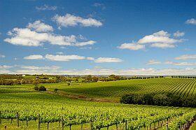 en vacances en Bourgogne sur la route des vins
