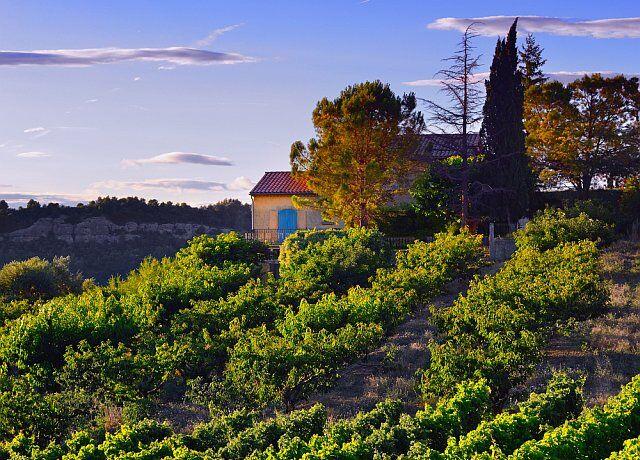 Vignes en Languedoc Roussillon