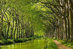 les berges du Canal du Midi