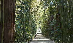 visitez la Bambouseraie