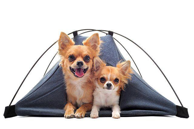 vacances en camping avec son chien
