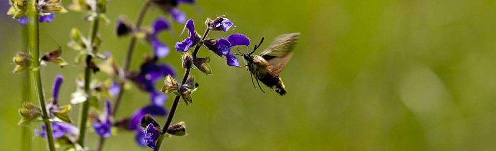 Champs de fleurs et papillons, la nature en France