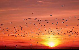 envolée d'oiseaux sauvage et observation des oiseaux