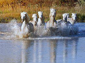 magnifique parc naturel régional de Camargue, site naturel de France