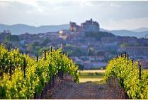 Vignes du Languedoc