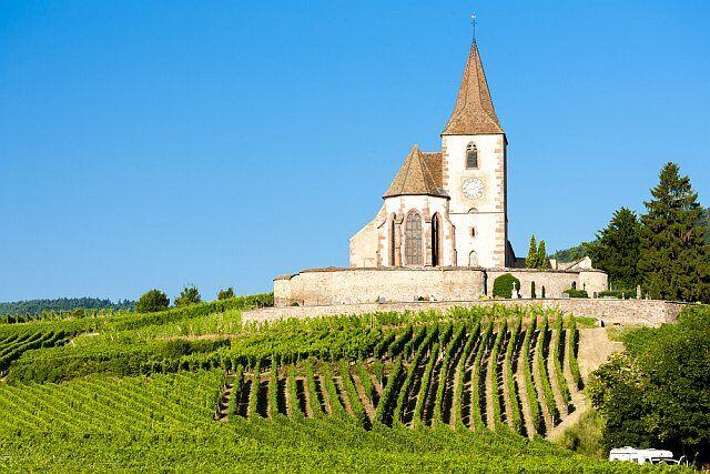 Champs de vigne en Alsace