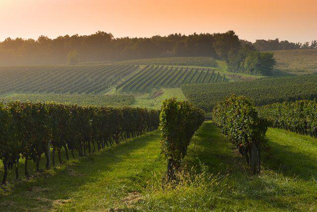 Coucher de soleil sur les vignes à Bordeaux