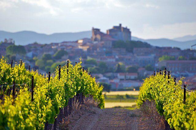 Paysage entre les vignes en Languedoc